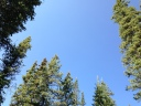 Blue skys from in the trees