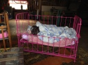 This is a real actual pig in a blanket, in a crib.